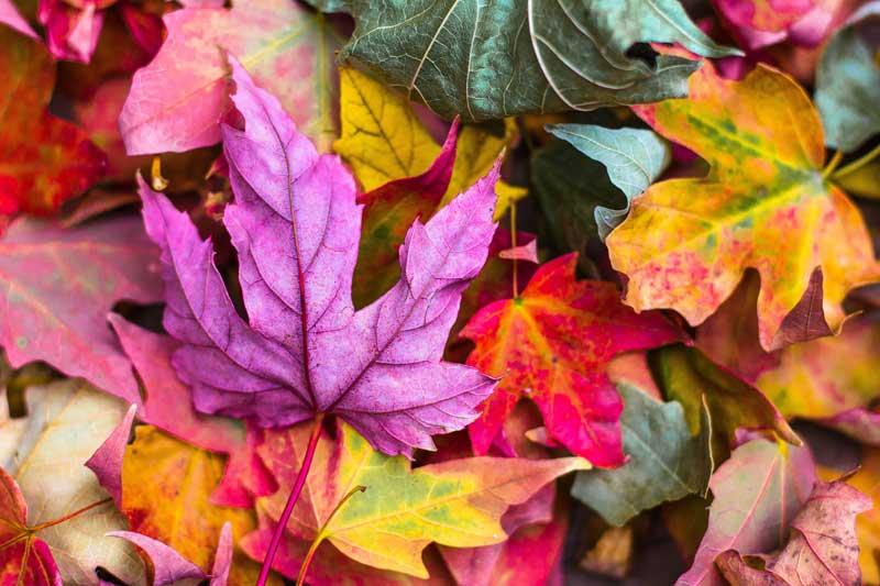 5 πράγματα που λατρεύω το Φθινόπωρο